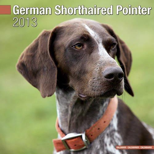 Pointer 2013 Calendar - German Shorthaired Pointer 2013 Wall Calendar #10040-13
