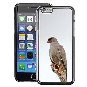 A-type Arte & diseño plástico duro Fundas Cover Cubre Hard Case Cover para Apple (4.7 inches!!!) iPhone 6 / 6S (Hawk Bird White Winter Nature Grey)