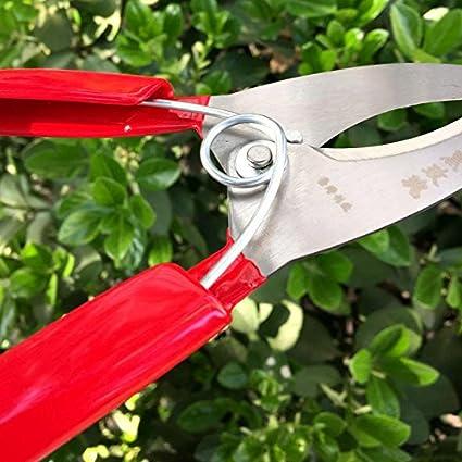 Amazon.com: Tijera de jardín árbol frutal Cutter Poda ...