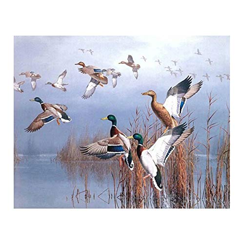 paint by numbers for adults duck - 6