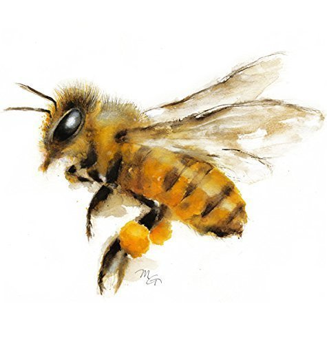 Honey Bee Baby Nursery - Honey Bee Watercolor Giclee Print