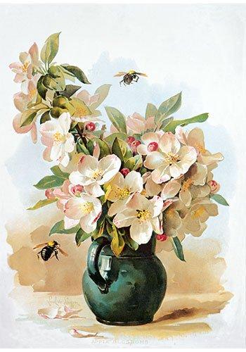 Apple Blossoms by Paul de Longpre Vintage Floral Art Print Poster (14 x 18)