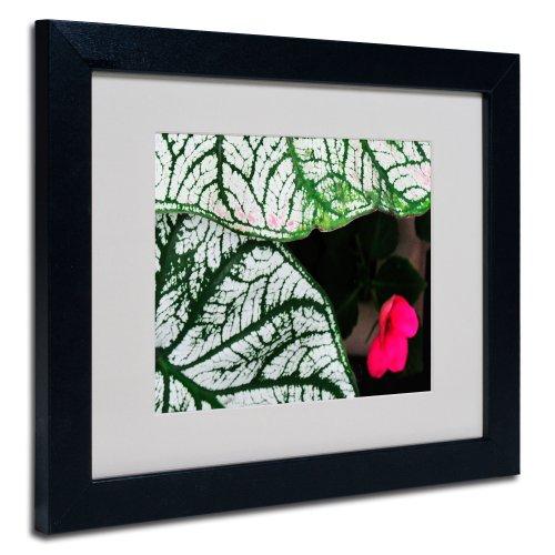 Trademark Fine Art Caladium Abstract by Kurt Shaffer, Black Frame 11x14-Inch by Trademark Fine Art