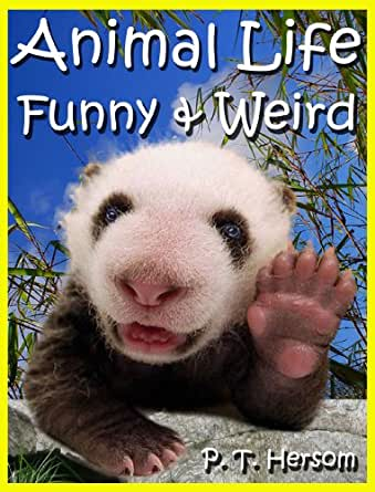 animal life funny amp weird land mammals   learn with