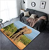 Vanfan Design Home Decorative Large African elephant bull (Loxodonta africana) Addo Elephant National park South Africa Modern Non-Slip Doormats Carpet for Living Dining Room Bedroom Hallway