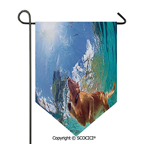 - Easy Clean Durable Charming 12x18.5in Garden Flag Underwater Photo of Golden Labrador Retriever Puppy Swimming in Pool Happy Decorative,Cinnamon Turquoise Double Sided Printed,Flag pole NOT included