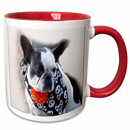 - 3dRose Sandy Mertens Halloween Designs - Dog Wearing a Skull and Crossbones Scarf - 15oz Two-Tone Red Mug (mug_156767_10)