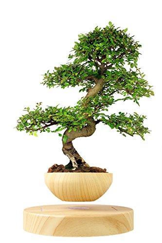 Levitating Blumentopf & Basis (Set) von Blu Devil | Haltbares Faux-holz plastik mit elektromagnetischer Technologie & Adapter für US, EU & UK | Ideal für die meisten Pflanzen | Perfekte Geschenk für Gärtner