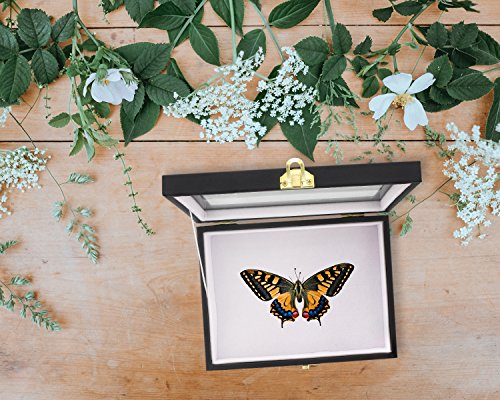 The 8 best insect collectibles