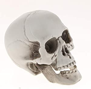 Plastic Human Head Skeleton Skull Figurines Sculpture for Halloween Home Decoration Craft Statues Collection Decor - #2
