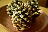 Scented Pine Cones, Citronella Scent, Pine cone decor, fire starters, pine cone fire starters, camp gear, Labor Day, scented fire starter