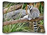 Decorative Standard Pillow Case Animals cat lemur log lemur 20