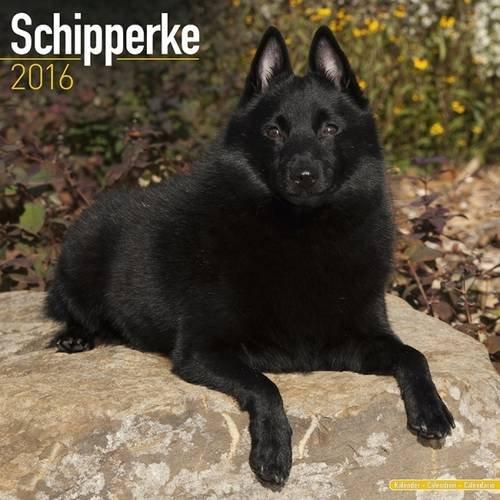 Schipperke Calendar - Breed Specific Schipperke Calendar - 2016 Wall calendars - Dog Calendars - Monthly Wall Calendar by Avonside