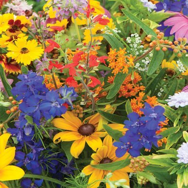 Butterfly Wildflower Seed Mix (David's Garden Seeds Wildflower Butterfly Hummingbird Mix SS30062A 500 Open Pollinated Seeds)