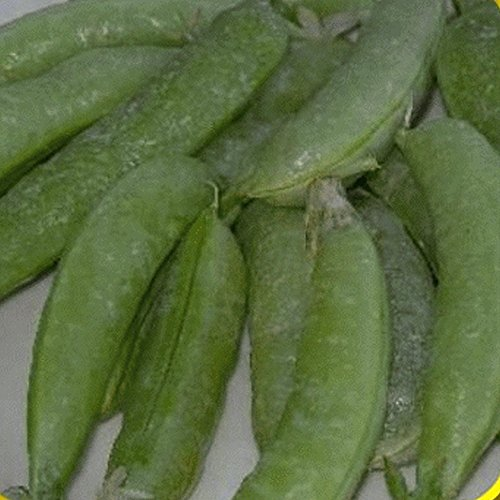 Everwilde Farms - 1 Lb Super Sugar Snap Pea Seeds - Gold ()