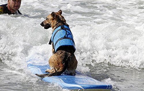 Dog Life Jacket Safety Reflective Vest Pet Life Preserver (Bule bone, XXL)