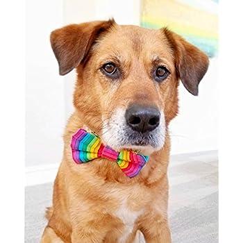 5a3417486950 Amazon.com : Precious Paw Prints Boutique Aloha Dog + Cat Bow Tie ...