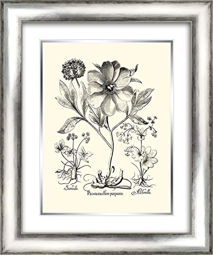er Peony II 20x24 Silver Contemporary Wood Framed and Double Matted Art Print by Besler, Basilius ()