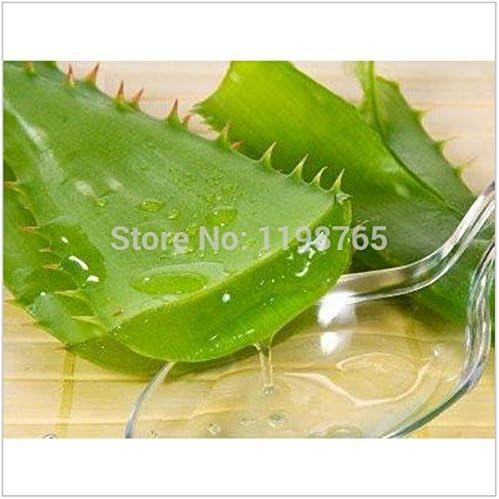 100 piezas de frutas verduras y semillas semillas de Aloe vera belleza comestible comestibles cosméticos Bonsai plantas Semillas para el hogar y el jardín 49%: Amazon.es: Jardín