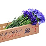 Stargazer Barn 100 Stems of Assorted Iris - Fresh Flowers - DIY Wholesale Party Packs - Direct from The Farm