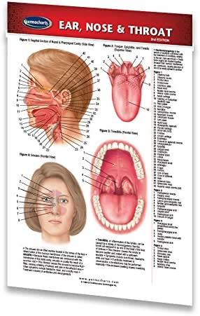 Ear, Nose & Throat Guide- Pocket Chart - Medical Quick Reference Guide by Permacharts