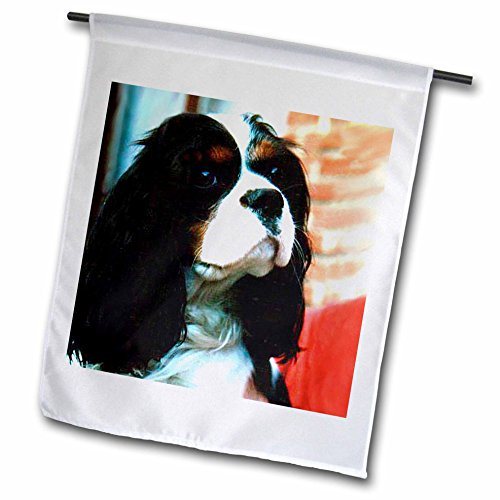 (3dRose Dogs Cavalier King Charles Spaniel - Cavalier King Charles Spaniels - 12 x 18 inch Garden Flag (fl_981_1))