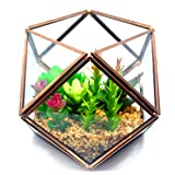 Cvens Clear Glass Terrariums,Geometric Terrariums,Geometric Air plants terrarium,Succulent planters,Artficial Plants Air Plant Geometric Terrariums Holder for Tabletop Succulent Plants Holder Review