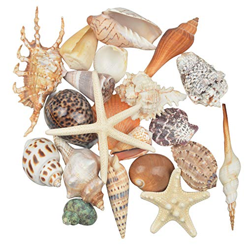 Jangostor 21 PCS Medium Sea Shells Mixed Ocean Beach Seashells,Various Sizes Natural Colorful Seashells Starfish Perfect for Beach Theme Party Home Decorations,DIY Crafts, Fish -