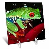 3dRose Danita Delimont - Frogs - South America, Panama. Red eyed tree frog on bromeliad flower. - 6x6 Desk Clock (dc_278318_1)