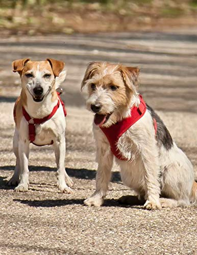 Rat Terrier Bone - Notebook: Terrier friends cute dog dogs race play friendship Jack Russell terriers puppy puppies