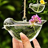 Generic Clear Glass Wall Hanging Vase Bottle for Plant Flower Decorations--Bird-14017122MG