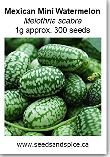 Mexican Mini Watermelon (Melothria scabra) 0.1g approx. 30 Seeds. 1g, 5g, 15g (1, Gram)
