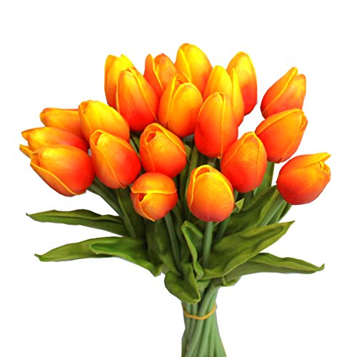 Mandy's Orange tulip 14