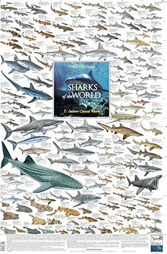 KP Sharks of The World - Inshore Coastal Waters