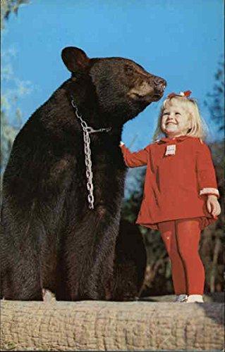 Gentle Ben - Ivan Tors Animal Actors Training Academy Homosassa Springs, Florida Original Vintage Postcard