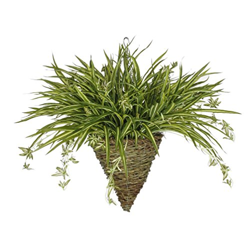 House of Silk Flowers Artificial Spider Plant in Cone Hanging Basket