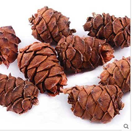 qin chenchen 10 Pieces Tasty Toasty Pine Cone Squirrel Rabbit Chew Treats Toys
