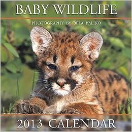 2013 Mini Baby Wildlife