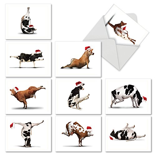 M6545XSG Holiday Bovine Nirvana: 10 Assorted Christmas Note Cards Featuring Fun and Flexible Cows Practicing Yoga Poses While Wearing Christmas Hats, w/White Envelopes.