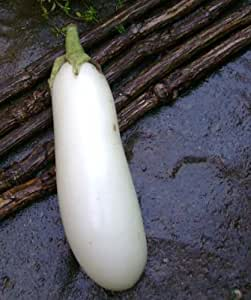 Casper White Eggplant 50 seeds * NON GMO * Early producer * CombSH I22