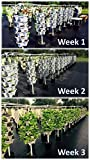 "New (20) Individual Stacking Hydroponic 13"" Pots"