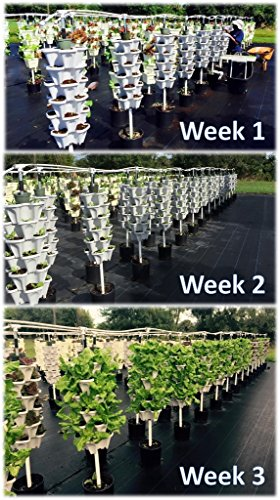 NEW (20) Individual Stacking Hydroponic 13'' Pots - Build Your Own Vertical Container Growing System - Grow Vegetables Herbs Strawberries Greens - Mr Stacky Food Safe Plastic Stackable Planters by Mr. Stacky (Image #2)
