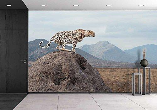 wall26 - Wild African Cheetah, Beautiful Mammal Animal. Africa, Kenya - Removable Wall Mural | Self-adhesive Large Wallpaper - 100x144 inches