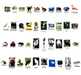 ✔  Funtastic Lights has turned LightBox image tiles into more than just pieces of plastic with letters, numbers and symbols with the set of 92 total tiles including 40 fascinating animals of the world and 52 colorful celebrat...