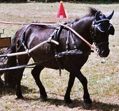 Harnais attelage poney - poney FWF