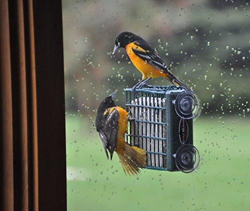 Cake Feeder (Kettle Moraine Window Mount Single Suet Cake Woodpecker Bird)