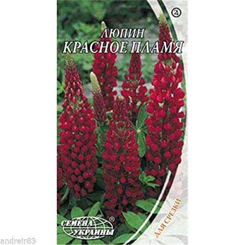Portal Cool Lupine Seeds Red Flame Tm Seeds of Ukraine - 0.5 G S1138
