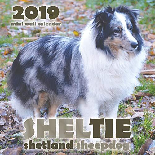 Sheltie: Shetland Sheepdog 2019 Mini Wall Calendar