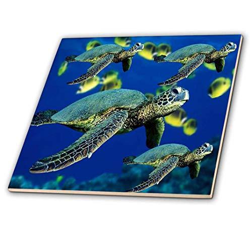 - 3dRose Sea Turtles - Ceramic Tile, 12