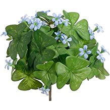 "8"" Shamrock Flowering Bush Blue (pack of 12)"
